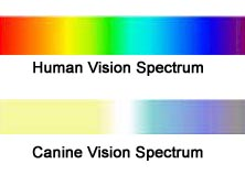 color spectrum.jpg